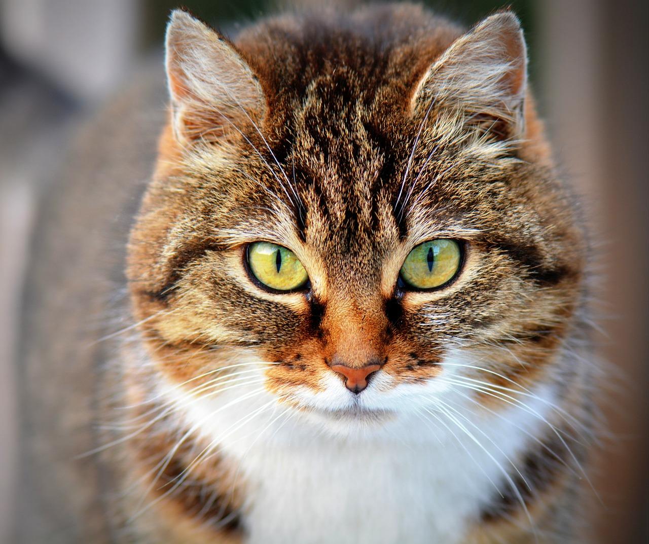 chat-photographier-un-animal
