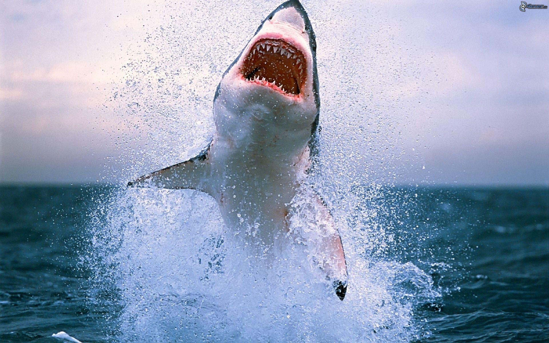 requin pris en photo sur le vif